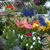 New! Videos of our flowers