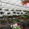 Why our Hanging Baskets are So Special