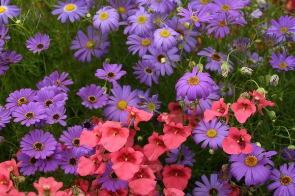 Plants Annuals Amazing Flower Farm
