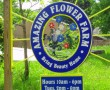 Amazing Flower Farm Sign