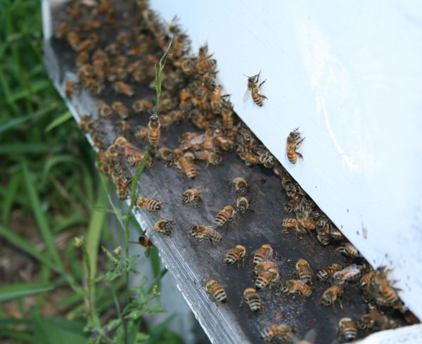Beekeeping workshop a sweet success