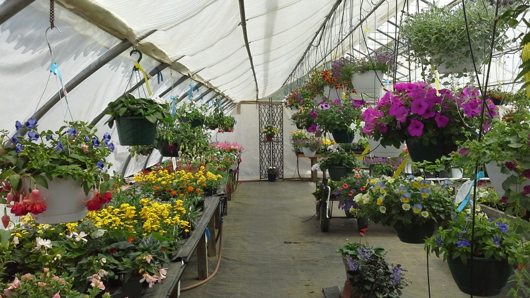 What makes our hanging baskets so special