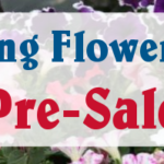 Amazing Flower Farm Pre-Sale