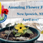 Amazing Flower Farm newsletter