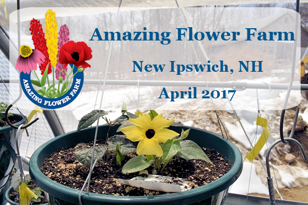Amazing Flower Farm Newsletter April 2017