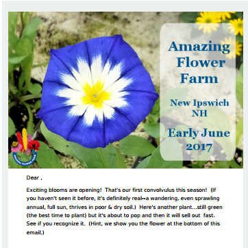 Amazing Flower Farm Newsletter Early June 2017