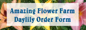 Order Daylilies