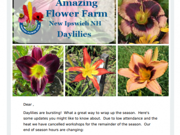 Amazing Flower Farm Newsletter Late July 2017