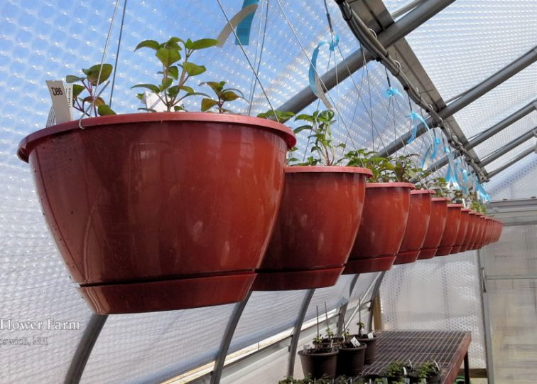 We really like these new copper-colored hanging baskets manufactured by K & C Plastics in Leominster, MA, only 19 miles away!