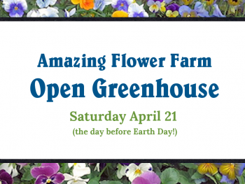 Amazing Flower Farm Open House