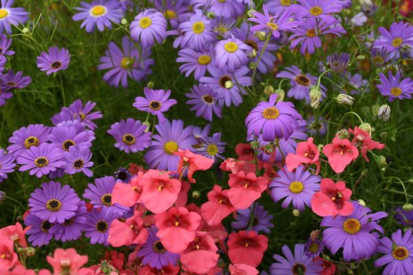 Plants – annuals
