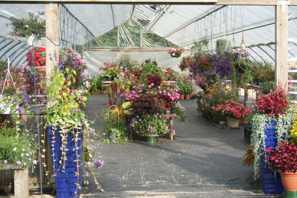 A quick introduction to Amazing Flower Farm